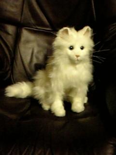 猫が来ました\(^^:;)...