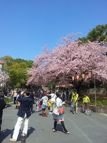 上野でオフ会(・∀・)!既に桜が咲いていました!